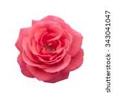 Stock photo rose pink flowers 343041047