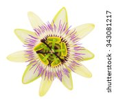 Passionflower. Isolated On...