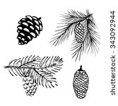 Hand Drawn Pine Branches For...