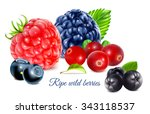 ripe wild forest berries.... | Shutterstock .eps vector #343118537