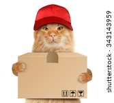 funny cat   delivery service.... | Shutterstock . vector #343143959