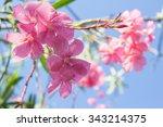 Oleander Rose Bay Flower....