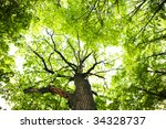 spring tree leaves background. | Shutterstock . vector #34328737