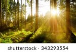 forest with sun rays | Shutterstock . vector #343293554
