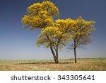 Flowery Yellow Ipe Tree