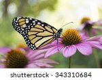 Stock photo monarch butterfly 343310684