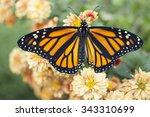 butterfly | Shutterstock . vector #343310699