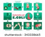 symptom of patients escherichia ... | Shutterstock .eps vector #343338665