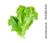 Salad leaf. lettuce isolated on ...