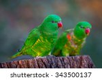 pair of scaly breasted lorikeet ... | Shutterstock . vector #343500137
