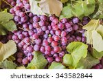 red grapes as very nice fruit... | Shutterstock . vector #343582844
