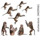 Many Views Of Baboon In...