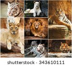 Different Lion  Tiger  White...