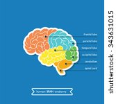 brain is a part of central... | Shutterstock .eps vector #343631015
