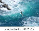 seagull on blue background | Shutterstock . vector #34371517
