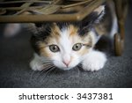 Stock photo cute kitten hiding ready to pounce on something 3437381