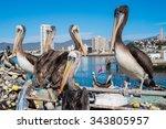 Pelicans In The Harbour Of...