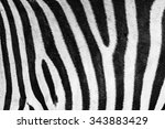 Zebra Skin Texture