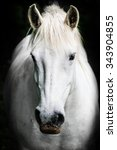 Portrait Of A White Horse.