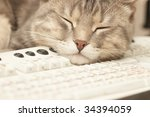 Stock photo pause at work cat sleeping on keyboard 34394059