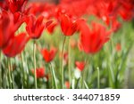 lots of bright red tulips... | Shutterstock . vector #344071859