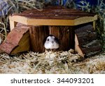 Hamster In A House