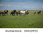 Horses Running / blue sky and green grass - stock photo