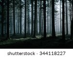 A Mysterious Dark Forest With...