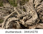 driftwood stump with amazing... | Shutterstock . vector #34414270
