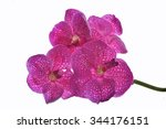 tropical pink orchid isolated... | Shutterstock . vector #344176151