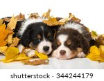 Puppies In Autumn Leaves