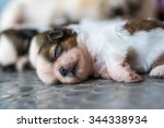 Stock photo shih tzu puppies are sleeping on the floor cute dog breed baby 344338934