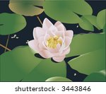 beautiful lily lotus.  a... | Shutterstock .eps vector #3443846