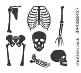 human skeleton.  orthopedic and ... | Shutterstock .eps vector #344388437
