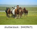 Horse Running / herd in  steppe - stock photo