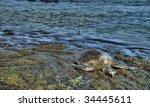 Sea Turtle Resting On Rocks....