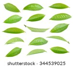 green tea leaf isolated on... | Shutterstock . vector #344539025