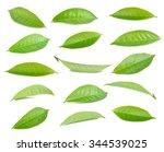 Stock photo green tea leaf isolated on white background 344539025