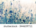 autumn sun shines dry thistle   ... | Shutterstock . vector #344639711