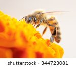 A Bee Resting On A Marigold...