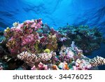 Small photo of Underwater landscape.