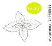 vector mint leaves on a white... | Shutterstock .eps vector #344955581