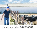 Farmers With Feed For Cows In...