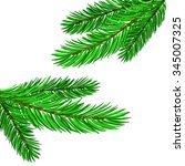 Fir Green Branches Isolated On...