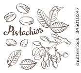 pistachio nuts with leaves and...   Shutterstock .eps vector #345010247
