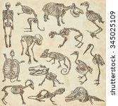 bones and skulls of different... | Shutterstock . vector #345025109