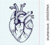 anatomical heart   vector...   Shutterstock .eps vector #345055964