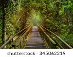 jungle rainforest tropic forest ... | Shutterstock . vector #345062219