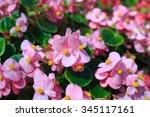 close up beautiful flower in... | Shutterstock . vector #345117161