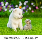 Stock photo puppy and kitten on green grass looking at each other 345153359